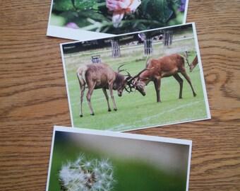 3 Original Postcard Prints - Deer, Rose, Dandelion