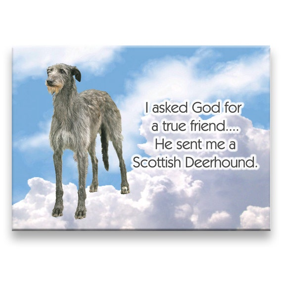 Scottish Deerhound True Friend Fridge Magnet