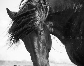 Horse photo, Horse Print, Black and White Photography, Percheron, Shop for a cause, Wall art, Equine Art, Western Decor