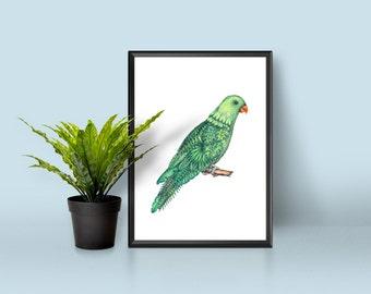 Print A3 - Parrot