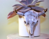 Handmade Small Ceramic Cow Skull Planter in White with 24k Gold Tips. Altered from vintage molds and perfect for plants or succulents.
