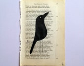 birds before bedtime - the village crow