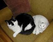 custom kitties - reserved for cksg