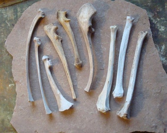 9 Assorted Real Bones for Altered Art Assemblage - Natural Found Objects