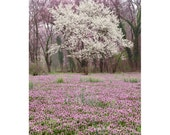 Dogwood Spring Photograph, 8x12, 11x17, 16x24 Virginia State Tree and Flower, Purple Deadnettle, White and Purple
