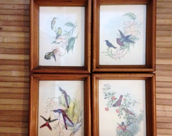 Hummingbirds  Set of 4 Framed Prints Hummingbird Illustration Bird Illustration Vintage 50s Prints  Hummingbird Violetear