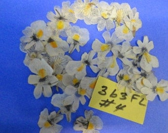 Choose your  Nemesia Flowers Grown, Pressed and Preserved in Alaska 363 FL