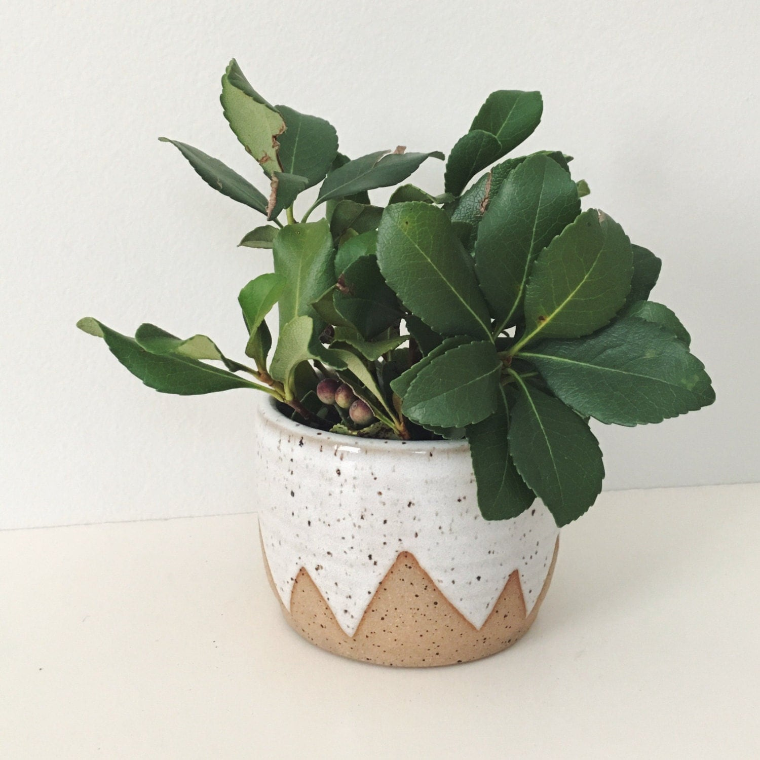 Small White Plant Pots Part - 28: ?zoom