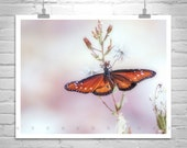 Butterfly Photography, Butterflies, Nature Photography, Fine Art Print, Insect Art, Wall Art, Red Butterfly, Pink Pastel