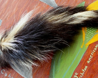 Skunk tail - Real eco-friendly striped skunk fur totem dance tail NO AROMA on carabiner keychain purse charm for shamanic dance SK02