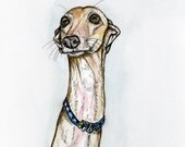 Italian Greyhound Art Dog Print