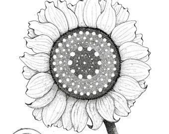 Sunflower, pen and ink, illustration, print