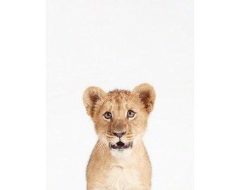 Lion Cub Little Darling. Animal Wall Art. Baby Animals Nursery Art Print. Animal Nursery Decor. Baby Animal Photos.