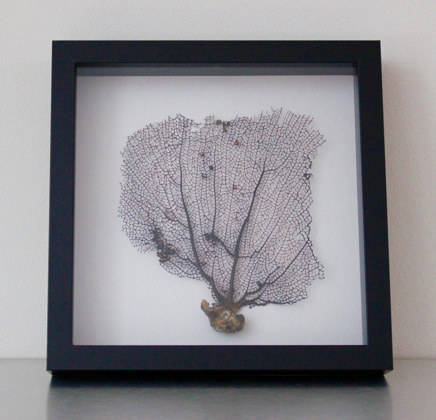 Preserved sea fan coral home decor art for Coral decorations for home