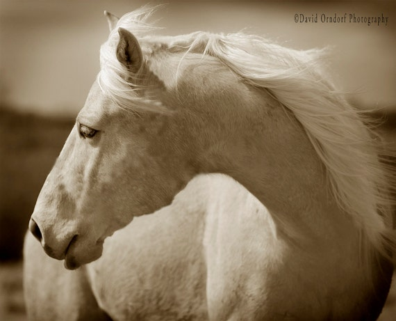 Horse Photograph - Western Wind - Fine Art Print 8x10 - Animal Photography - Rustic Gifts - Nature prints