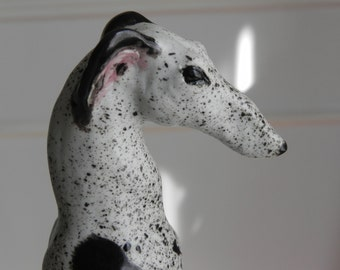 black and white greyhound, whippet, sighthound, saluki, lurcher