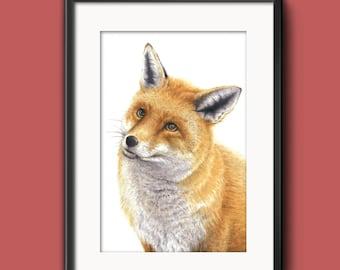 Spring Fox -  Watercolour Art Print (8 x 12 inches)