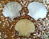 3 SHELL Tiles