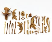 Tiny Real Animal Bones   30 Pieces and Fragments