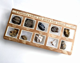 Fossil Collection, Box of Fossils of the World, Fossils for Crafting Collecting, Educational Fossil Collection, GeoLinea Fossil Collection
