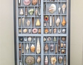 Seashell art, mixed media wall sculpture, with a colorful display of sea shells that are cut and seen in relief within reclaimed wood boxes.