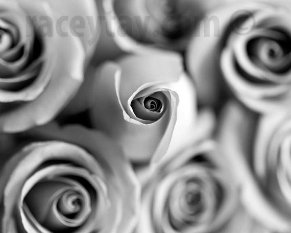 Flowers Photography, Large Wall Art, Roses, Black and White, Gray, Neutral, Rose Photos, Shabby Chic