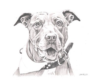 Pit Bull, Lily - Open edition print of an original drawing (fits 11x14 frame)