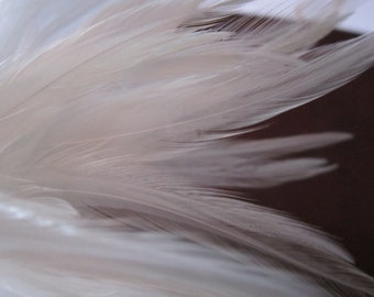 "5"" strip of WHITE Strung Saddles Rooster Feathers - individual feathers about 3"" long"