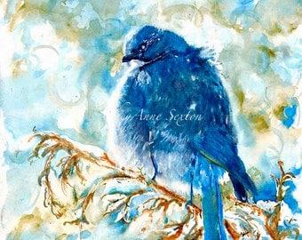 Watercolor Bird art - ORIGINAL Wall Art Painting Wild Blue Scrub Jay Juniper trees New Mexico 9x12