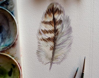Hawk Feather Painting - Original watercolor feather study