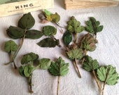Antique Millinery Supplies. Green Leaves Oak, Ash, Bay & Rose Leaves Old New Stock Flower Maker/ Vintage Millinener
