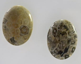 Gray fossi coral oval cabochon, 30x40mm - #1770