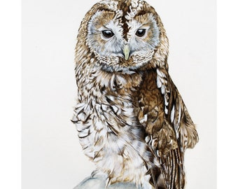 Tawny Owl - Limited Edition Giclee print from an Original painting by Gayle Mason
