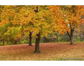 "Fine Art Color Nature Photography ""Autumn Trees in Forest Park 2"""