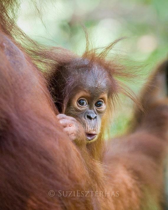 Baby Animal Print, BABY ORANGUTAN Photo, Safari Baby Nursery Print, Nursery Wall Art, Child Room Decor, Jungle, Monkey, Kids Room, Green