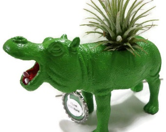 Air plant in lime green hippo animal planter. Cool kids room decor.