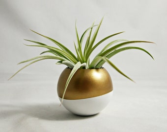 Sphere Succulent Air Plant Pod Planter // Gold + White Colorblock