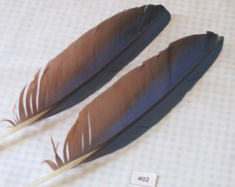 Green Wing Macaw Feathers -9 Inch to 13 Inch Bird Feathers