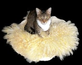 Wool Cat Bed - Humane Felted Fleece Pet Bed - White Coopworth - Ready to Ship - Supporting US Small Farms
