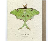 Luna Moth Greeting Card - Plantable Seed Paper - Blank Inside