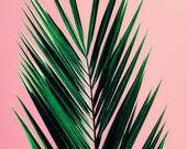 gift for her // stocking stuffer for her // gift under 15 for her//  - Pink Palm, original photograph 5x7 for her