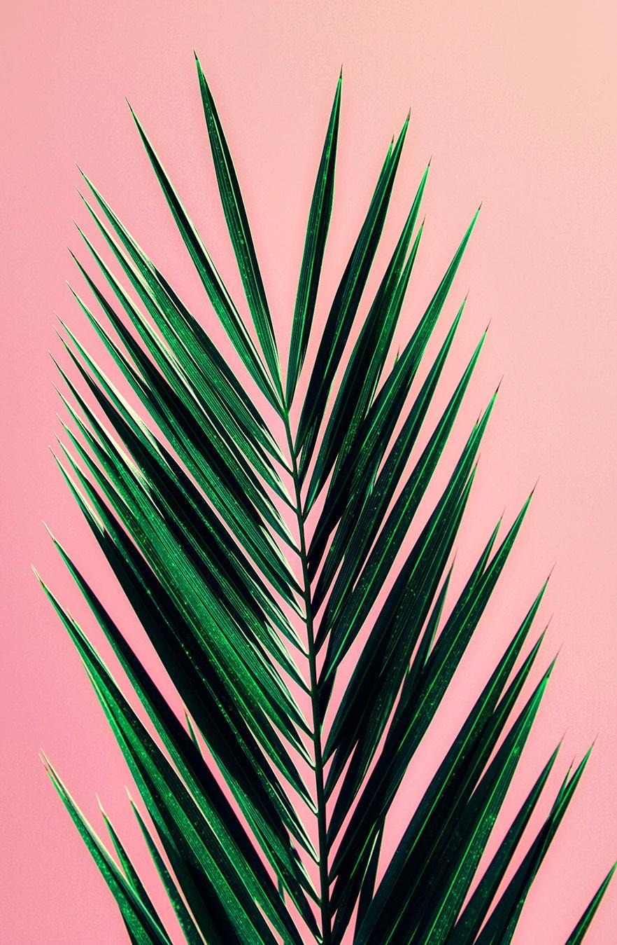Palm Tree Art Print Photography Mid Century By