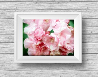 Oleander, flower fine art photography, pink, green flower blossoms, vintage style nature photo, romantic home decor, horizontal art