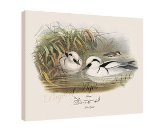 """Canvas Print - Smew by John Gould (1804-1881) - 16"""" x 20"""" - On Stretched Canvas"""