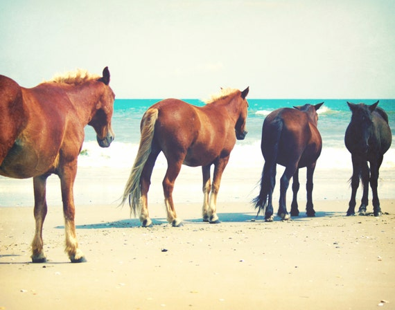 Coastal Decor Equine Photography | Horses Beach Photography | Outer Banks Art Print | Horse Wall Art Print | Equine Home Decor Photography