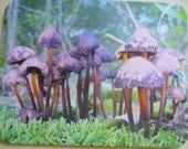 art print mouse pad mat mousepad natural wild mushrooms fungi woodlands forest nature woods