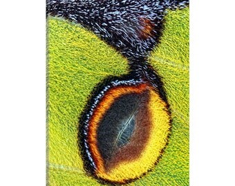 iCanvas Eyespot Gallery Wrapped Canvas Art Print by Jimmy Hoffman