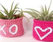Valentine's Day Air Plant in Cotton Bowl