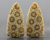 Beautiful Fossilized Coral Earring Pair, Flower Pattern, Petoskey Stone Agatized Coral Fossil, Jewelry Matching Cabochon (CA4549)