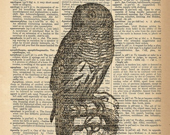 Dictionary Art Print - Owl - Wise Old Owl Vintage Print - Upcycled Vintage Dictionary Page Poster Print - Size 8x10
